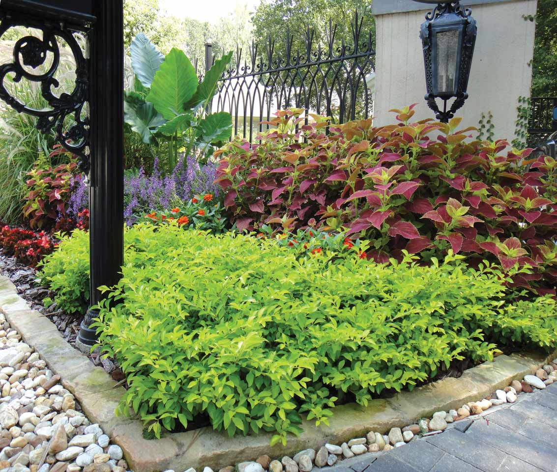 Color your garden atlanta home improvement for Home garden design atlanta