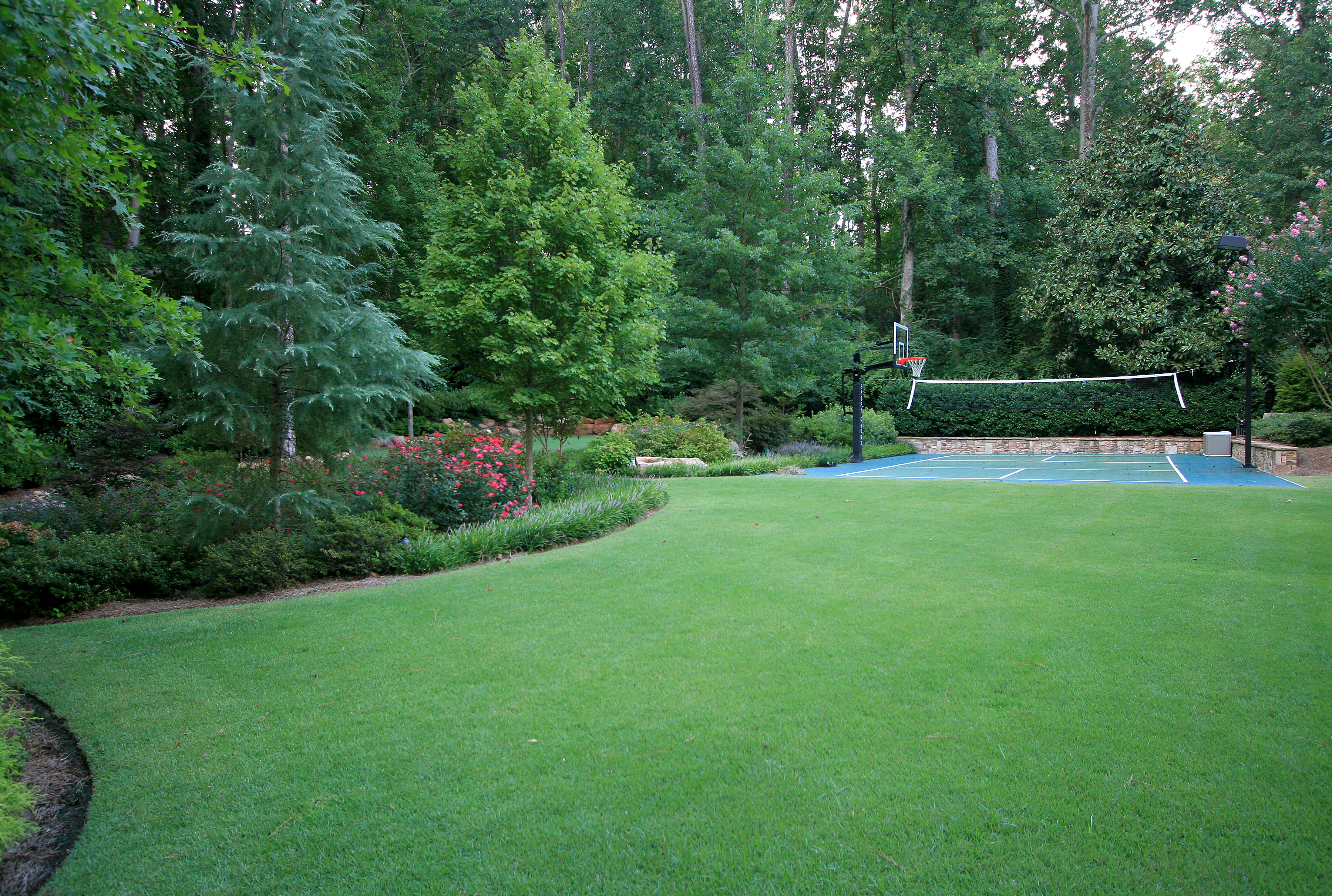 Landscaping Ideas For Cedar Trees : Meyer zoysia lawn with blue evergreen deodar cedar tree and
