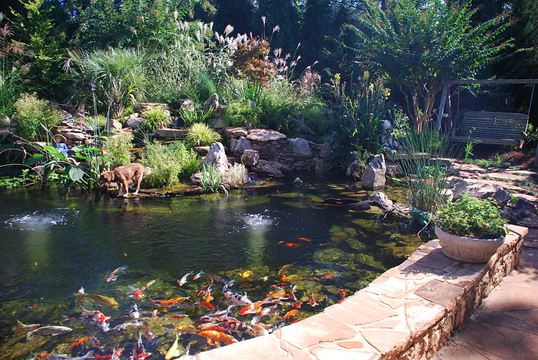 What you need to know before building a pond atlanta for Building a koi fish pond