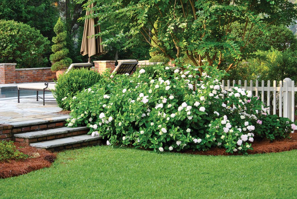 Low maintenance landscaping tips atlanta home improvement for Plants that require no maintenance