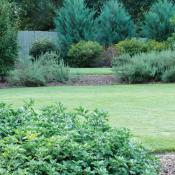 Trees and shrubs used as privacy fencing