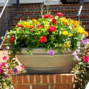 Pot with annuals