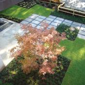 Modern landscape design with Mondo Grass, Japanese Maple and American Boxwoods
