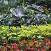 Landcape with beautiful plantings