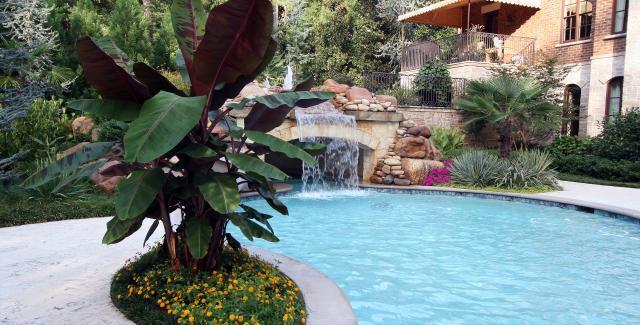 tropical paradise around pool
