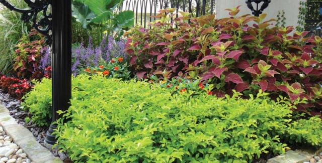 Landscape design with a variety of plants