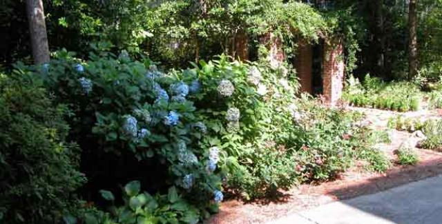 blooming_shrub