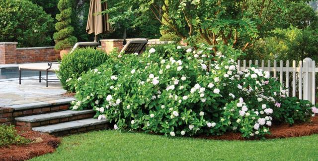 Low maintenance landscaping tips atlanta home improvement for Beautiful gardens and maintenance